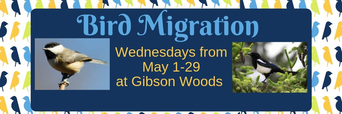 Bird Migration  May 19 Page