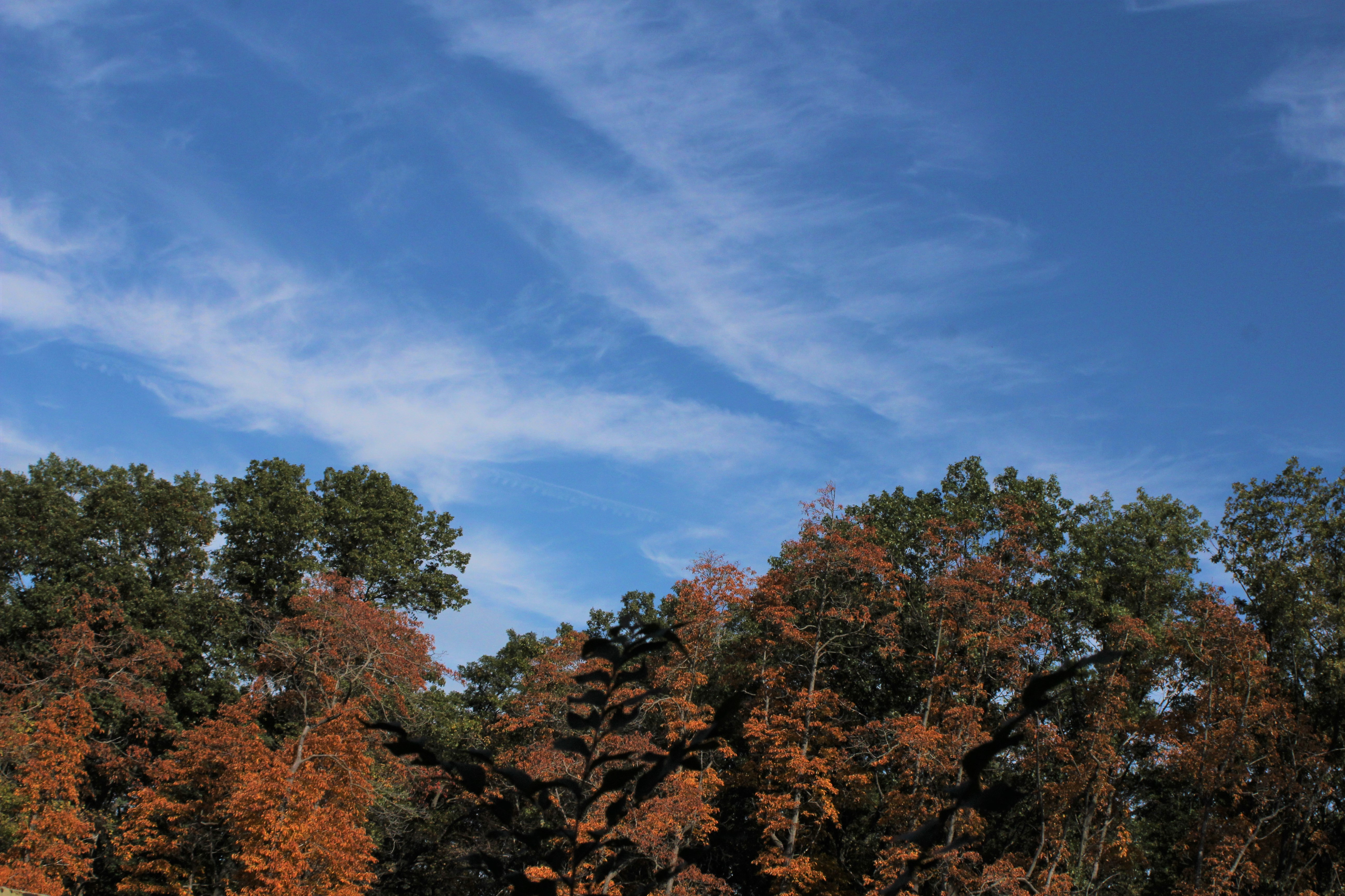 blue sky with fall color 2